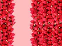 与空间的很多成熟草莓在玫瑰背景的文本的 健康食物的概念 免版税库存图片