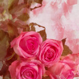 与空间的玫瑰文本的。 免版税库存照片