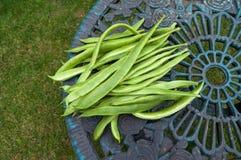与空间的红花菜豆 库存照片