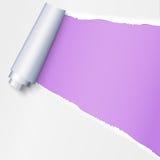 与空间的现实被撕毁的开放纸在紫色背景,在纸的孔的文本的 纸被撕毁的小条与参差不齐的 免版税库存照片