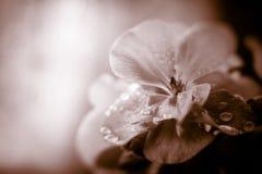 与空间的花卉背景文本的 库存图片