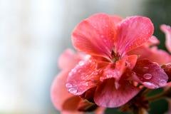 与空间的花卉背景文本的 库存照片