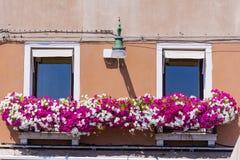 与窗口的古色古香的大厦与桃红色开花的喇叭花在Venezia开花 免版税图库摄影