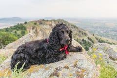 与站立在一个美好的风景上的岩石的一块红色班丹纳花绸的美丽的黑猎犬 免版税图库摄影