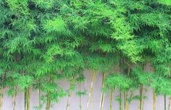 与竹叶子的抽象春天绿色背景 免版税库存照片