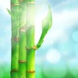与竹叶子的自然禅宗背景 免版税图库摄影