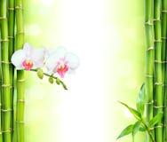 与竹子的白色兰花 免版税库存图片