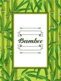 与竹植物和叶子的框架 库存例证