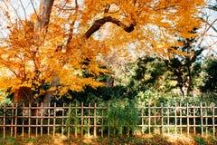 与竹篱芭,佐仓市的五颜六色的秋叶叶子, 免版税库存照片