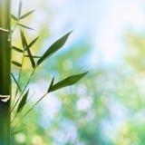 与竹草的东方抽象背景 库存照片