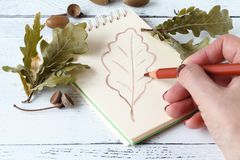 与笔和写生簿的手图画 秋叶 免版税库存图片