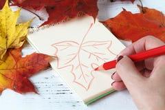 与笔和写生簿的手图画 秋叶 库存照片