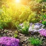 与第一春天的美丽的花床开花 免版税库存图片