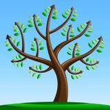 与箭头的结构树 免版税库存照片