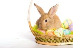与篮子和鸡蛋的复活节兔子 免版税图库摄影