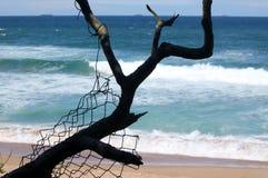 与篱芭片断的重的分支在剪影的反对海 库存照片