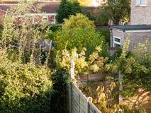 与篱芭绿色树庭院的后院场面 库存图片