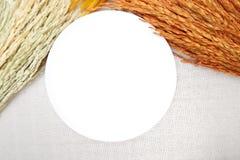 与米的耳朵的白色盘在棉花背景的 库存图片