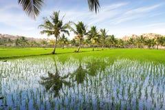 与米种植园的美丽如画的横向。 印度 免版税库存照片