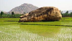 与米种植园的美丽如画的横向。 印度 图库摄影