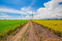 与米领域和蓝天的美好的风景 免版税库存照片