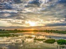 与米领域和蓝天的美好的风景 免版税图库摄影