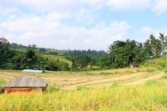与米领域的乡区在巴厘岛 免版税库存图片
