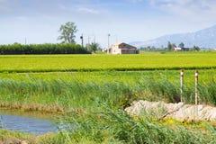 与米领域的典型的农村风景 免版税图库摄影