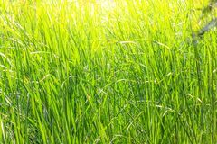 与米领域的美好的风景 免版税图库摄影