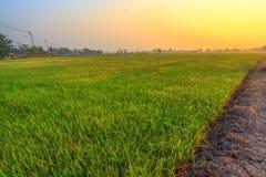 与米领域的美好的风景 免版税库存照片