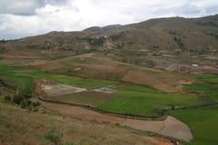 与米领域的风景在安巴拉沃菲亚纳兰楚阿,马达加斯加 免版税库存照片