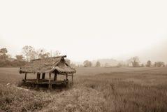 与米领域,泰国的小屋 免版税库存图片