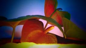 与精美光的美丽的平安的花 免版税库存照片