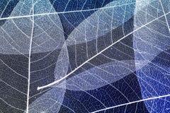 与精美美丽的透明渔网l的自然本底 库存图片
