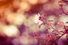 与精美词根的花卉背景 免版税库存照片