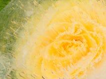 与精美黄色玫瑰的抽象 图库摄影