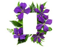 与紫罗兰色在白色背景和空白的贺卡的创造性的布局隔绝的花、叶子 概念查出的本质白色 免版税库存图片