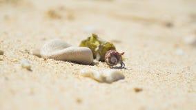 与紫色壳步行的逗人喜爱的寄居蟹在白色海洋沙子 库存图片