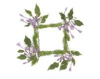 与紫色玉簪属植物的花卉框架开花,绿色叶子 库存照片