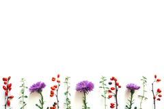 与紫色花和红色莓果的秋天背景 免版税图库摄影