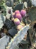 与紫色花接近的宏指令的仙人掌 免版税图库摄影