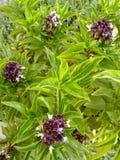 与紫色花的绿色在庭院2里 库存照片