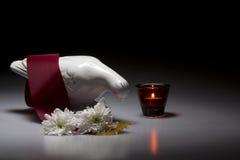 与繁文缛节和菊花的瓷哀悼的鸠 图库摄影