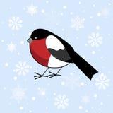 与红腹灰雀的冬天背景 免版税图库摄影