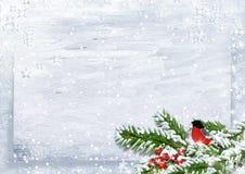 与红腹灰雀的圣诞节背景在雪分支 免版税库存照片