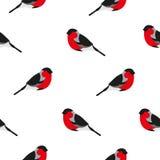 与红腹灰雀的无缝的样式 免版税库存照片