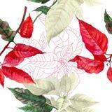 与红色一品红植物的无缝的样式 免版税库存图片