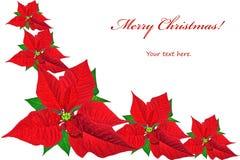 与红色一品红的圣诞卡 免版税库存图片