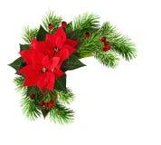 与红色一品红花,杉木枝杈的圣诞节框架和烘干 图库摄影