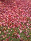 与红色下落的叶子的垂直的构成在草 免版税图库摄影